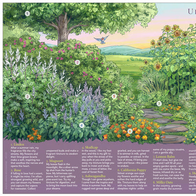 Herbs of High Summer Poster by Urban Moonshine featuring 12 herbs in a beautiful illustration of a summer herb garden in the countryside of Vermont.  LEFT side art detail