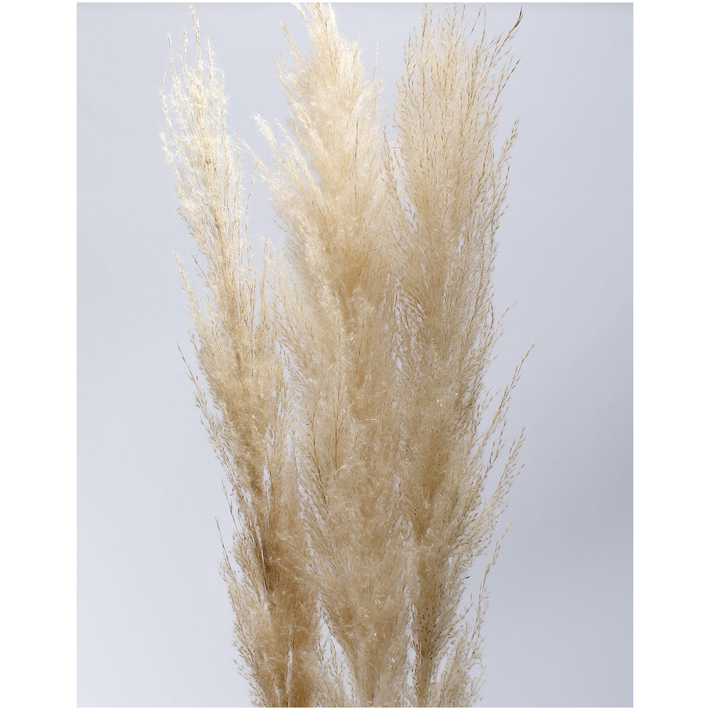 Pampas Grass - Plants - Black Rooster Maison
