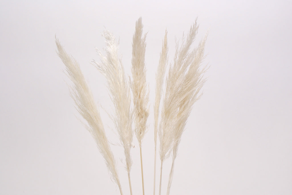 White Pampas Grass - Black Rooster Maison