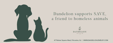 Dandelion in Princeton SAVE A Friend to Homeless Animals