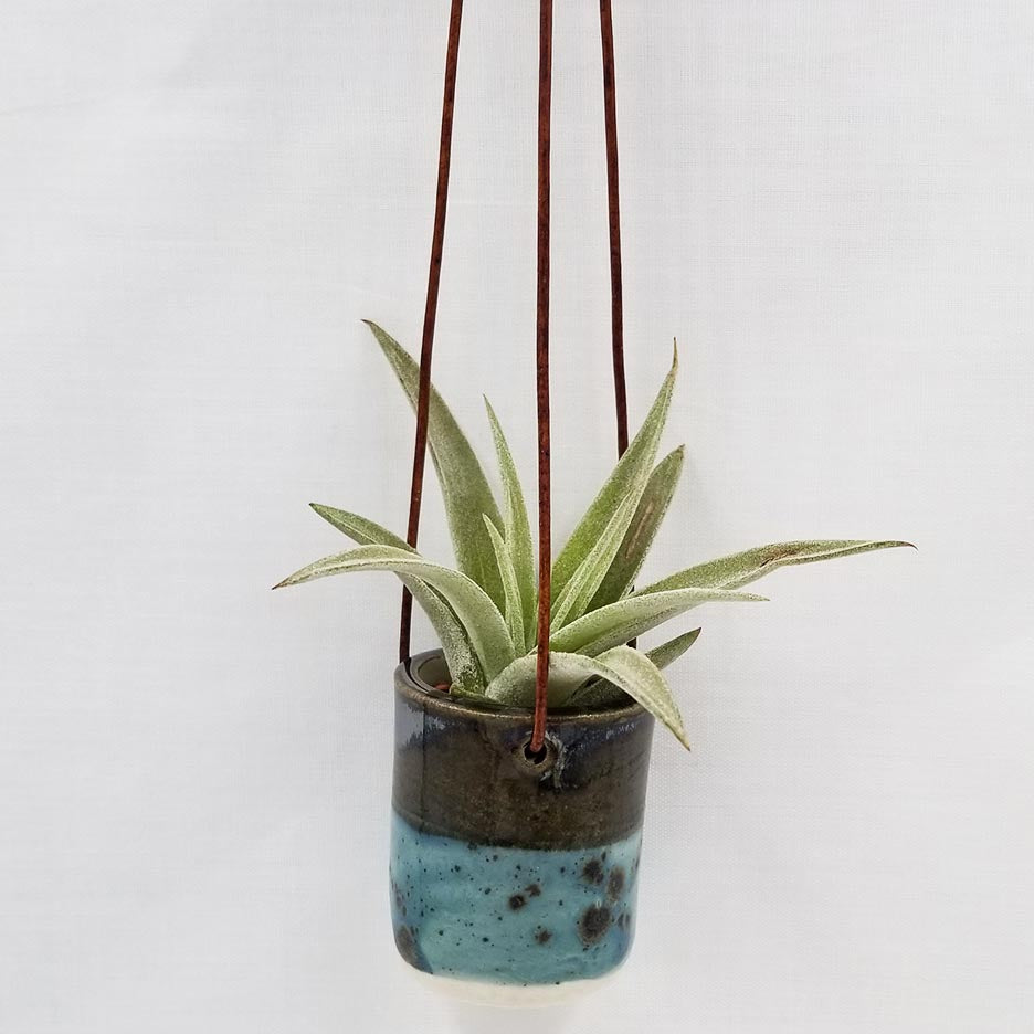 CERAMIC HANGING AIR PLANT HOLDER WITH AIR PLANT