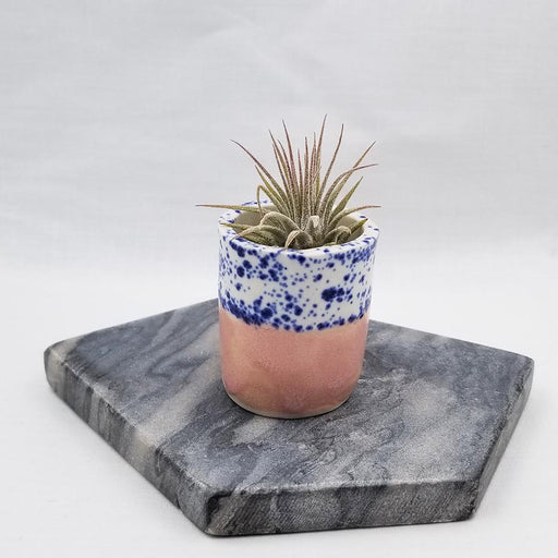 CERAMIC SITTING AIR PLANT HOLDER WITH AIR PLANT