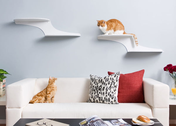 Cat Clouds Cat Shelf