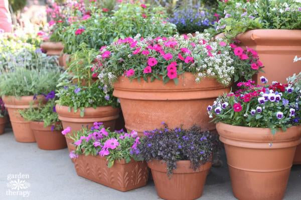 Tips & Tricks for Better Container Gardening