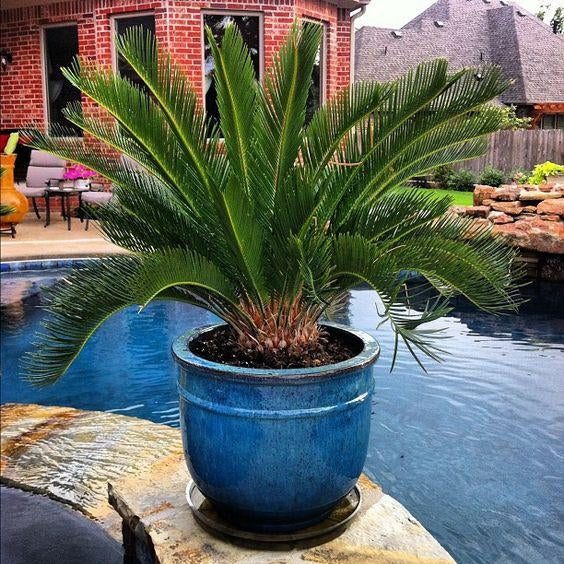 Great Plants for Patio and Pool Side Containers