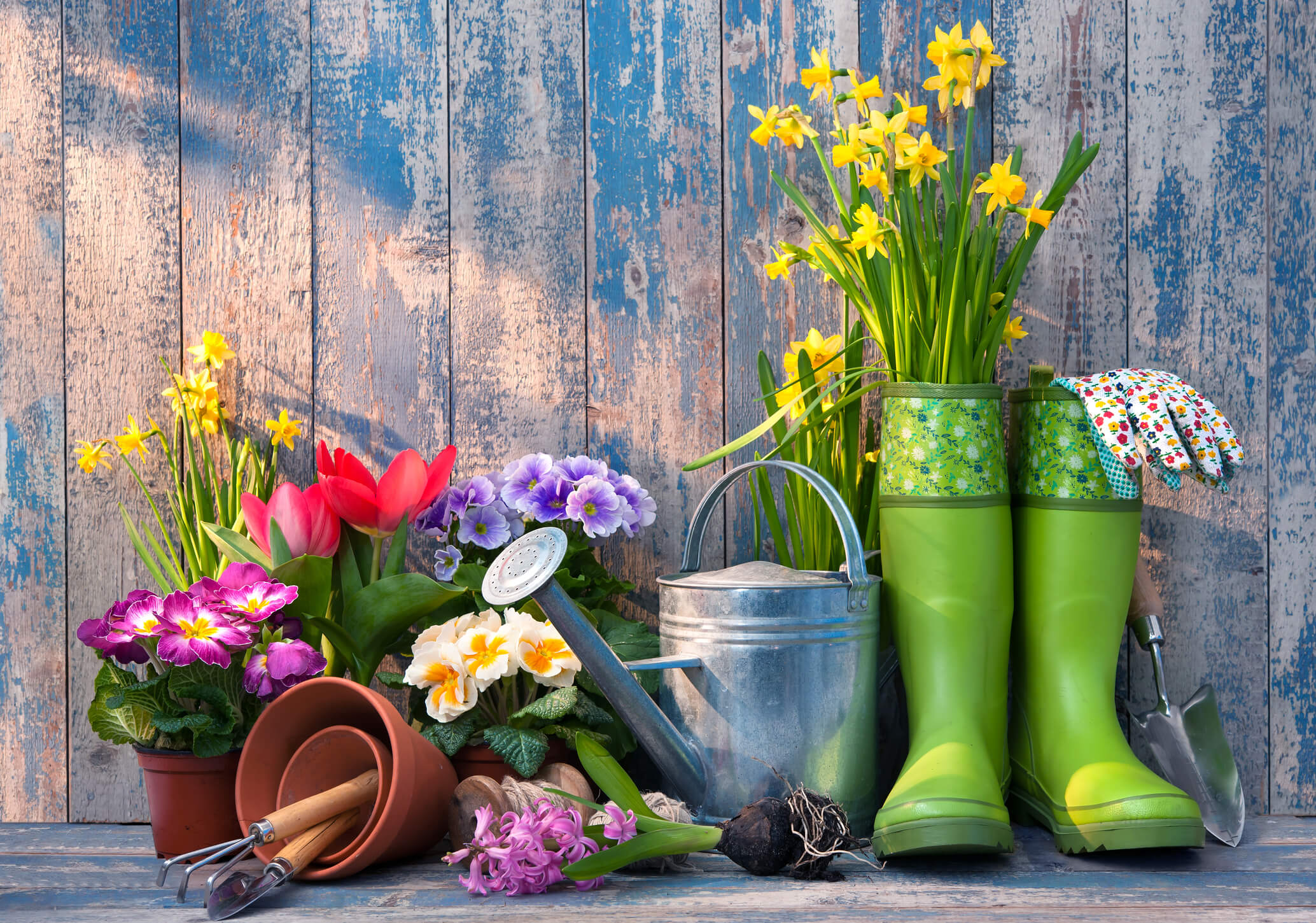 Popular Products to Buy from Your Local Garden Nursery