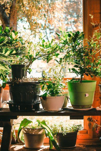 Fall Season Prepping for Your Yard and  Potted Plant