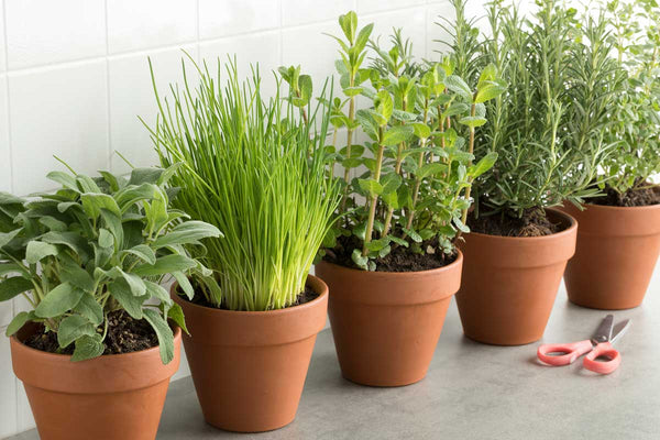 Reusing Your Container Garden Soil