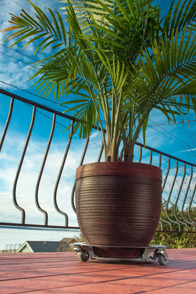 Selecting a Plant Caddy for Heavy Potted Plants