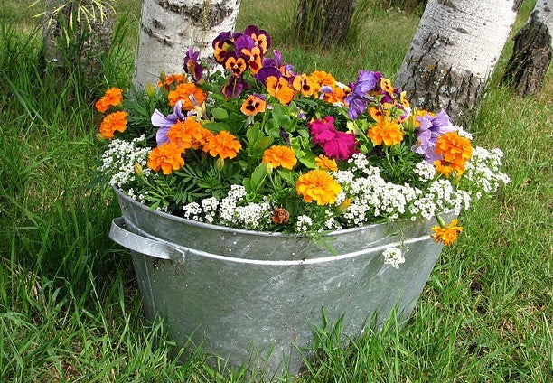 Choosing Pots for Container Gardening