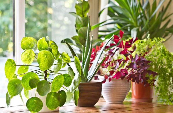 Staging Your Home with Plants