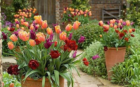 Planting Bulbs in Containers for Early Spring Flowers