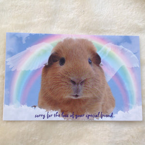 Exclusive Sorry For Your Loss Guinea Pig Card