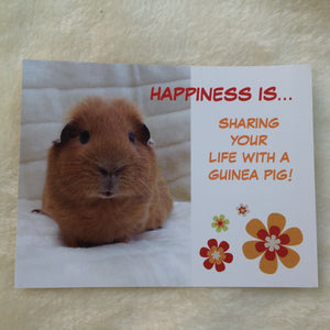 Exclusive Happiness is... Guinea Pig Postcards