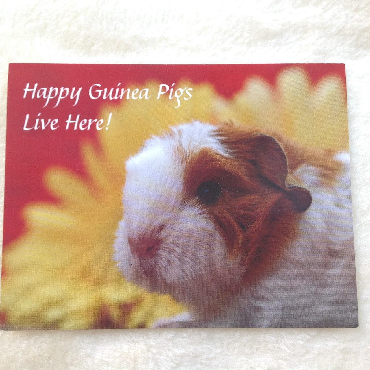 Exclusive Happy Guinea Pig Live Here postcards