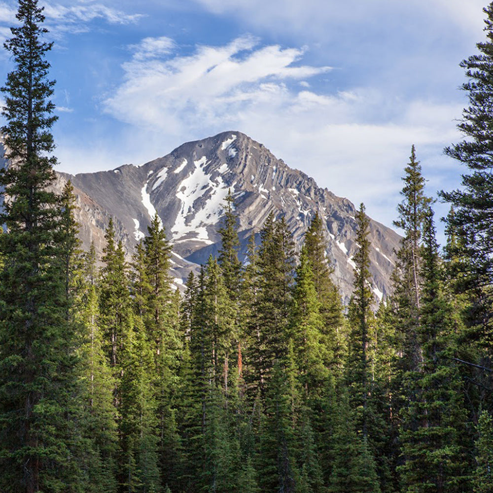 Beautiful Mountain-scape with Pine Trees in the Foreground