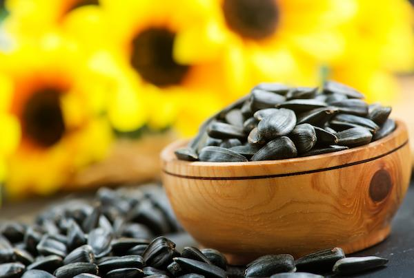 Bowl of unpeeled sunflower seeds with sunflowers in the background
