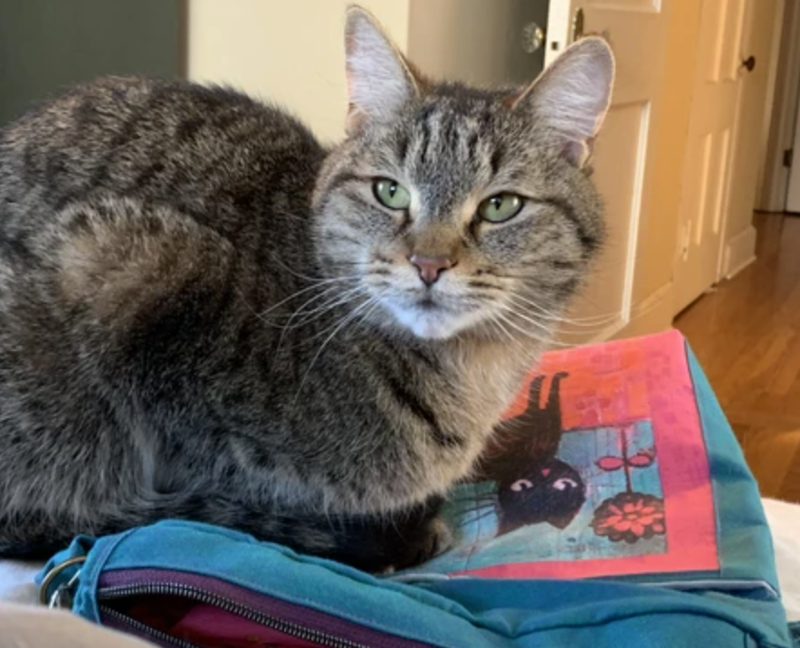 SEWING WITH CAT FABRIC (and cats)