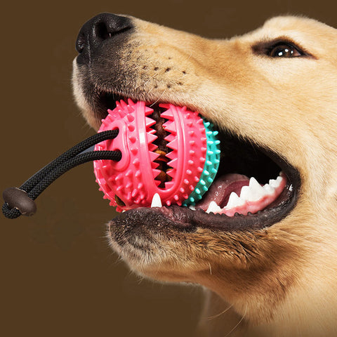 dog toothbrush molar bite toy