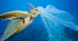 BIO-PLASTIC - NOT THE ANSWER! (for single-use items)...