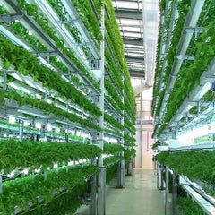 Aeroponics Solutions - Urban & Industrial farmers