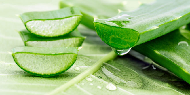 Aloe Vera Gel - What to look for when buying this. – Skinsense - Natural  Luxury