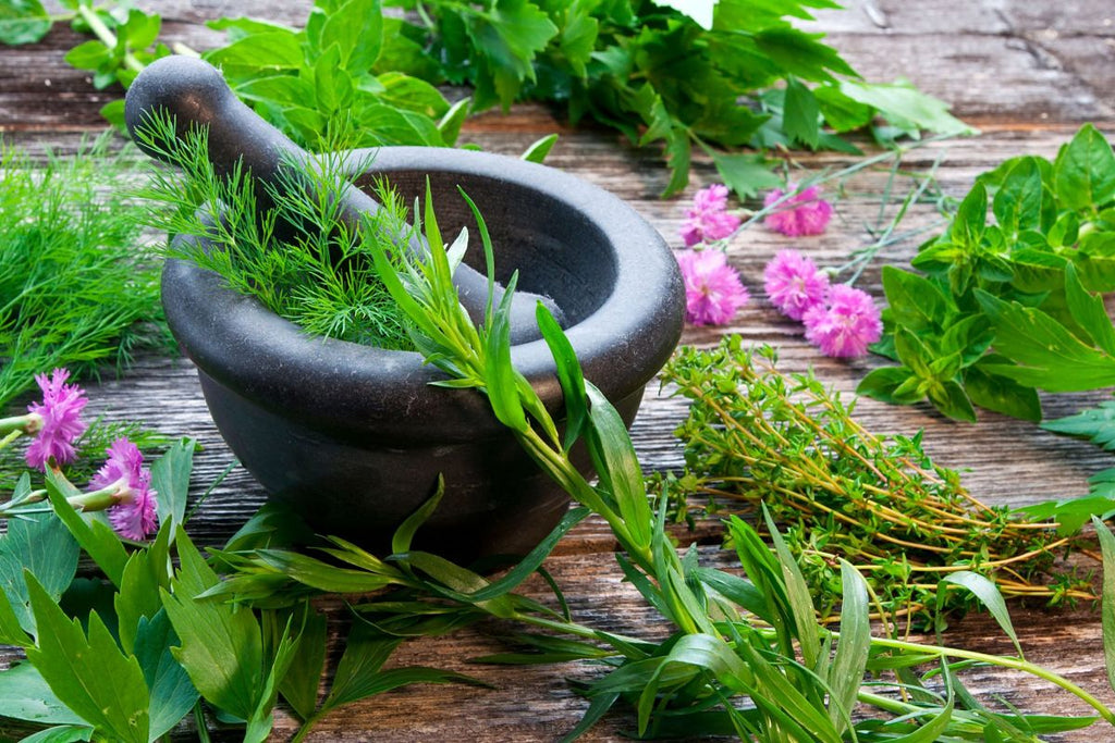 Herbs in ayurveda and skincare