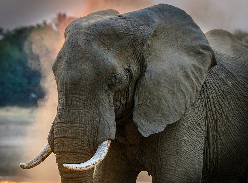 8 Wonders About Elephant Poop