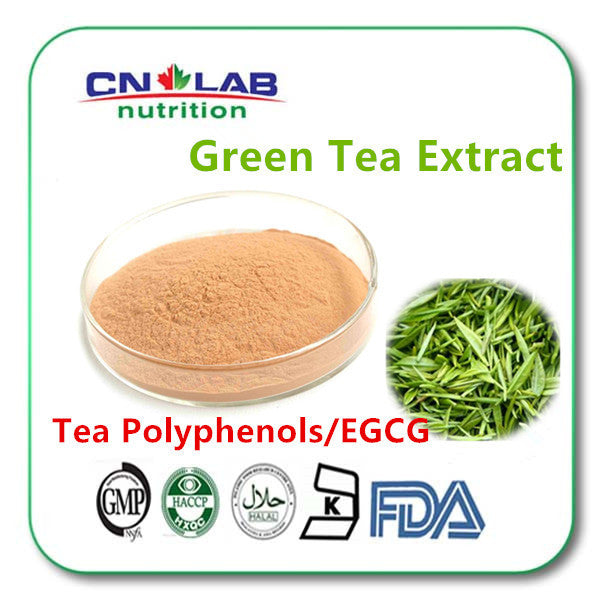 Matcha Powder Green Tea Extract Powder 100g
