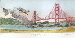 The Elegant Tern Visits San Francisco
