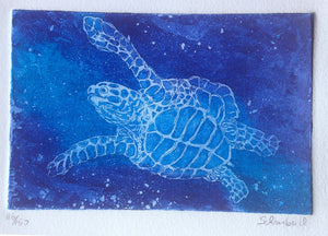 11x14 matted Turtle