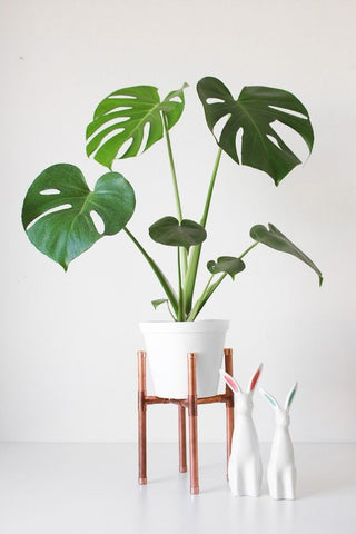 monstera-huisplant-interieur