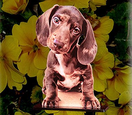A puppy photo cutout.