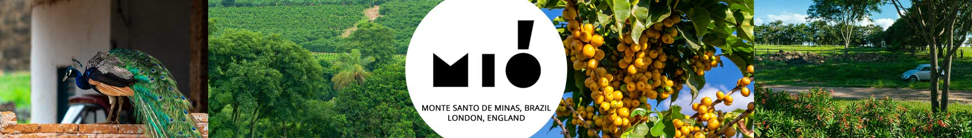 Mio Farm Brazil Direct Trade UK Best Coffee Subscription