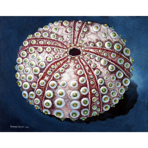 "'Sea Urchin #65 - Green Pearl' Limited Edition Digital Fine Art Print on Metal 16"" x 20"""