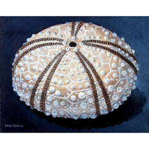 'Sea Urchin #66 - Tan Splendor' Limited Edition Print