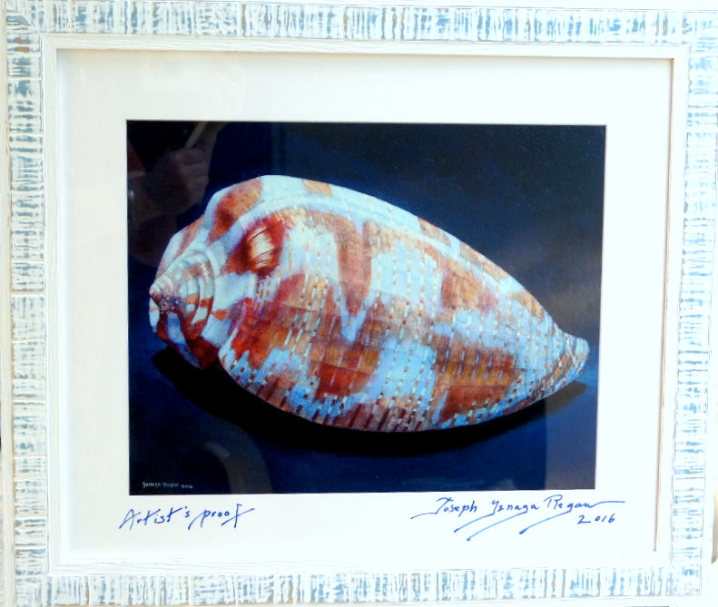 'Tulip Cone Shell' Print Reproduction AP