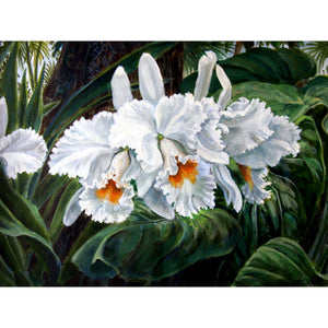 "'White Cattleya Orchid' Fine Art Painting Giclee Limited Edition Artist Proof 19"" x 23"" Framed"