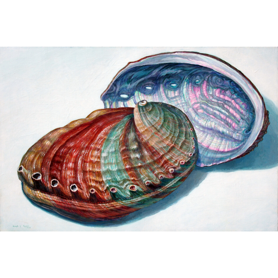 'Abalone Pair' Limited Edition