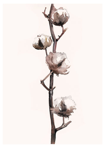 Cotton Plant Watercolour Painting - About Face Illustration