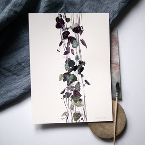 Ceropegia Woodi - String of Hearts Watercolour Print - About Face Illustration