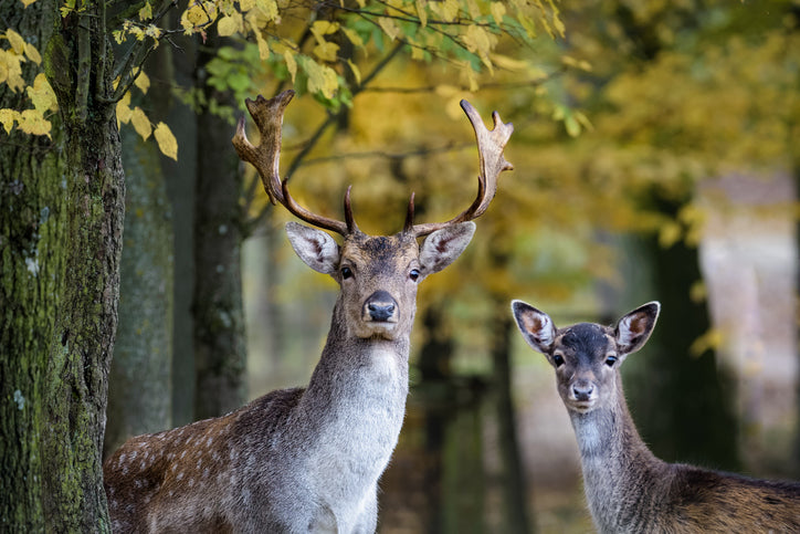 What Are Deer Placenta Supplements?