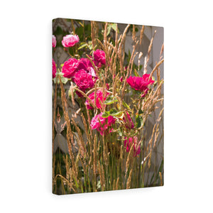 Wild Roses Canvas Gallery Wrap