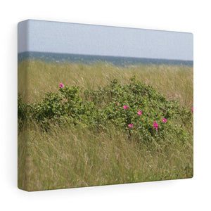Flowered Sea Grass Canvas Gallery Wrap
