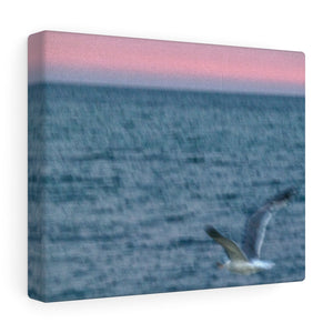 Nantucket Abstract Seagull Sunset Canvas Gallery Wrap