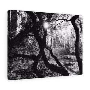 Peeking Through Monochrome Canvas Gallery Wrap