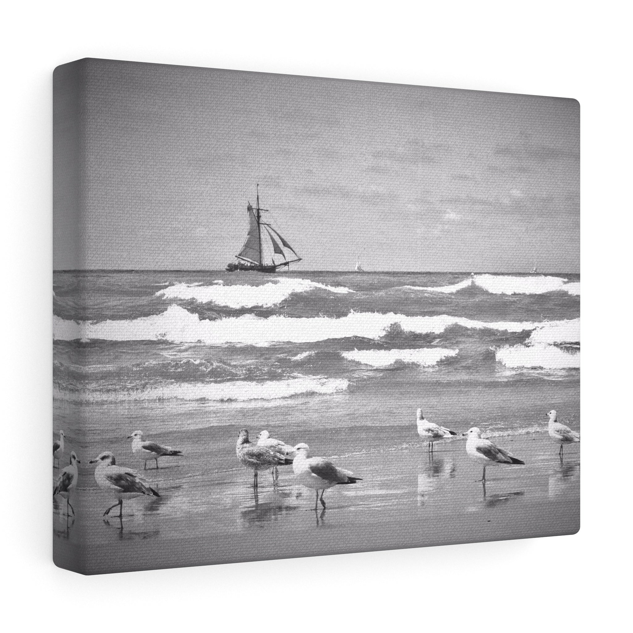 Seagull Shoreline Canvas Gallery Wrap