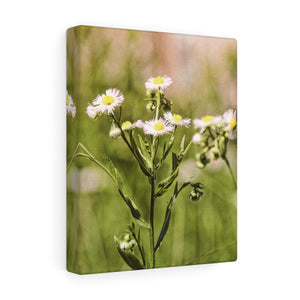 Nantucket Wild Flowers I Canvas Gallery Wrap