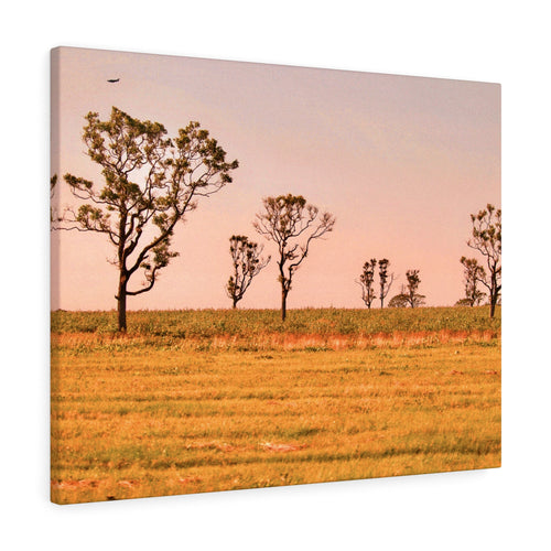 Wild Dreamer Sunset Canvas Gallery Wrap