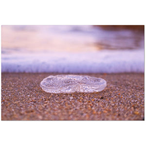 The Beached Jellyfish Giclée Print